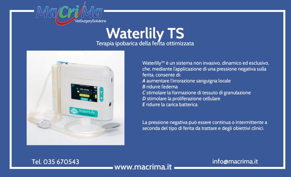 Waterlily TS